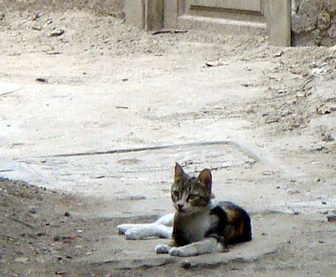 egyptcat1.jpg
